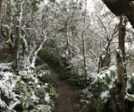雪中的猴山小徑,攝於2016霸王寒流期間