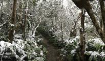 雪中的猴山小径,摄于2016霸王寒流期间